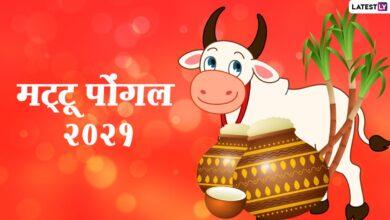 Mattu Pongal 2021 Wishes & Images: मट्टू पोंगल की दोस्तों-रिश्तेदारों को दें बधाई, भेजें ये हिंदी Quotes, HD Photos, GIF Greetings और वॉलपेपर्स